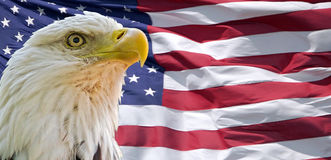bald-eagle-american-flag-front-32160142